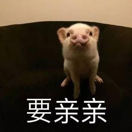 今天社长要推荐一部吸猪 ╭^^^╮ {/ o o /} ( (oo) ) ))) 鼻祖动画图片