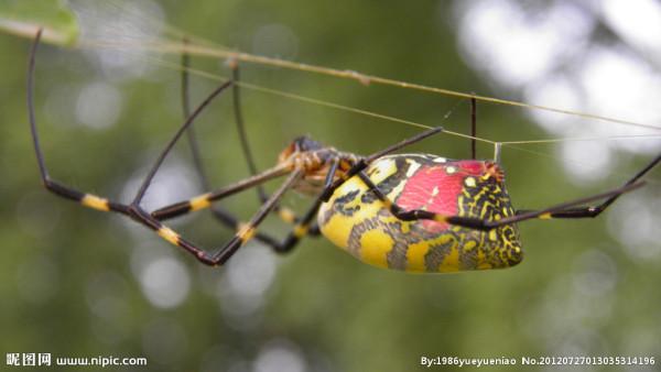 百度蜘蛛表情包分享展示图片